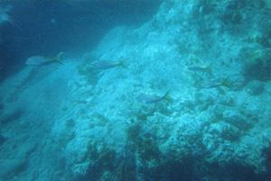 fonds marins